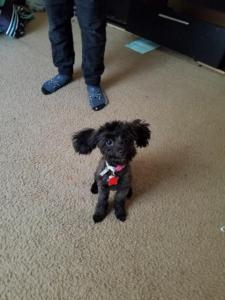 CoCo -Puppy