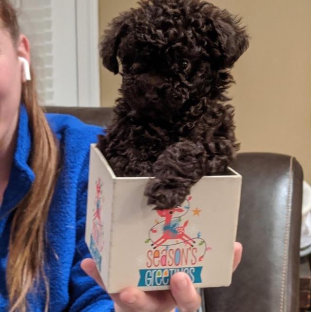 KoKo - Puppy