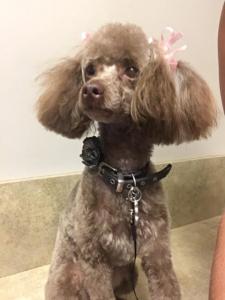 Maggie Mae - Puppy